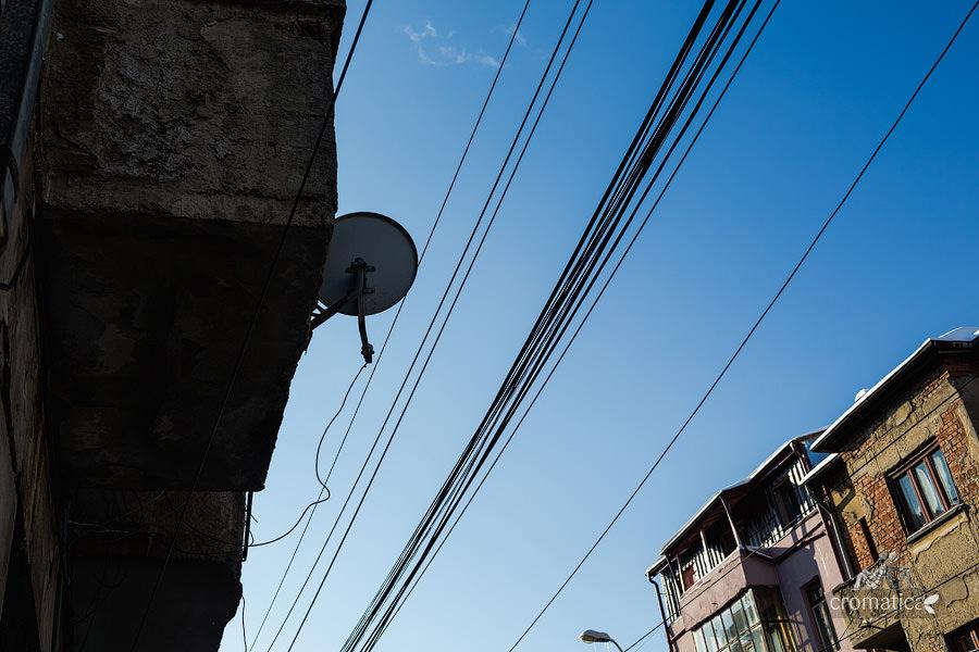 Strada Lizeanu - Lianele negre ale unei jungle autohtone (10)